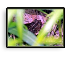 IN HIDING Canvas Print