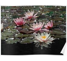 Sunlit Water Lilies and Reflections Poster