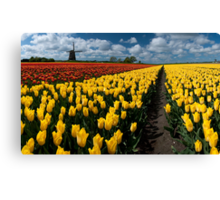 Out In the Tulip Fields Canvas Print
