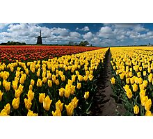 Out In the Tulip Fields Photographic Print