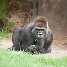 Western lowland gorilla in thought by Tom Grieve