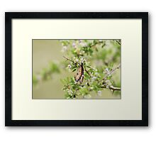 Butterfly and Flowers Framed Print