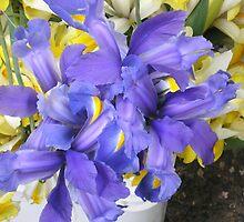 Iris by AuntieBarbie
