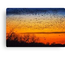 Swarm Setting – Sandhills over The Platte Canvas Print