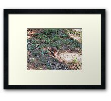"Late season Fawn -2 ""Hidden Deer"" Framed Print"