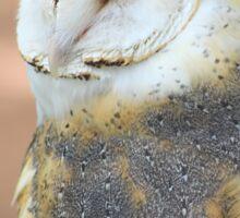 "Barn Owl - ""Edgar"" Sticker"