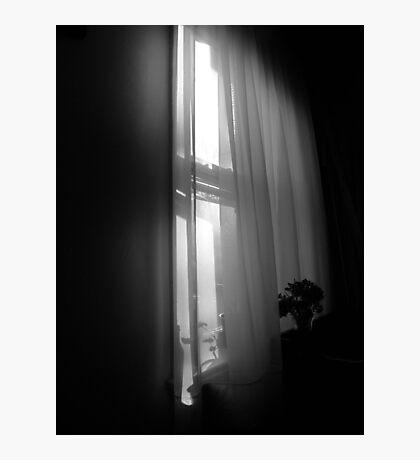 Sheer Sunlight Photographic Print