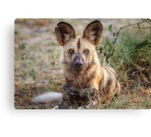 Wild Face of a Dog Canvas Print
