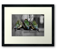 Three Birds in a Row.  Framed Print