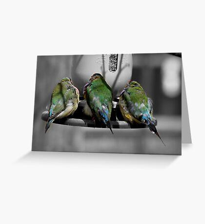 Three Birds in a Row.  Greeting Card