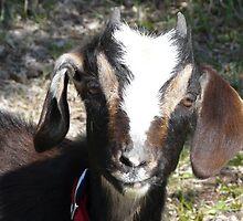 Boo,My Baby Goat..`Hi Mama`` by MaeBelle