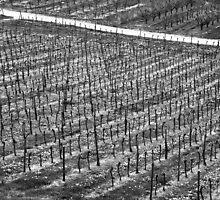 Vineyard by Klaus Offermann