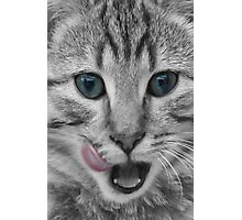 Tabby Cat Licking its Lips Photographic Print