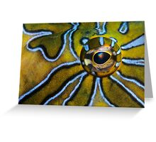 Eye-Liner Greeting Card