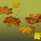 leaves by shadowlea