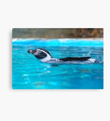 Gone swimming Canvas Print