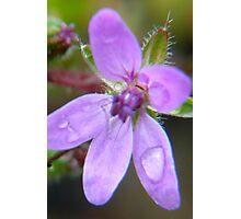Raindrops Keep Falling On My Petals Photographic Print
