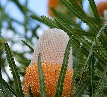 Banksia by todski2