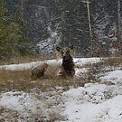 Stormn' Elk by JamesA1