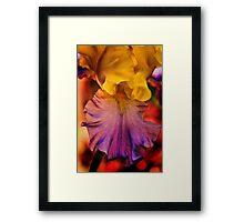 Iris Kaliedescope Framed Print