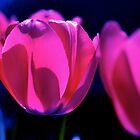 Threelips by photodork
