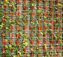 Potted Ivy by Elaine Teague