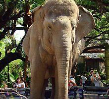 Just One Elephant by Wanda Raines
