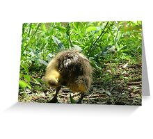 Gosling Greeting Card
