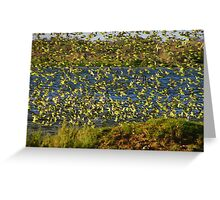 Flock of Budgies Greeting Card