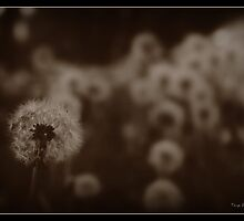 Antique Dandilion by Tonye Banks