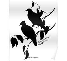 Black Rose-crowned fruit dove Poster