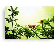 In the Blossom Mood of Spring. Canvas Print
