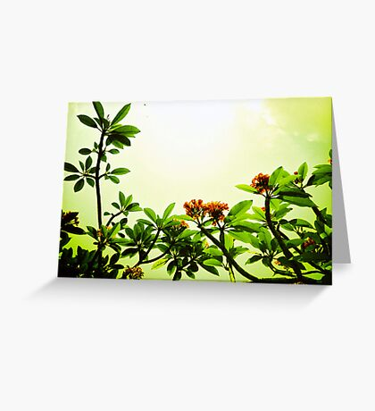 In the Blossom Mood of Spring. Greeting Card