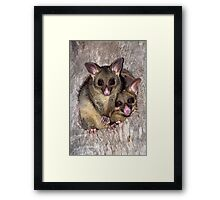 Coco and Yoyo - Australian Possum and Her Baby Framed Print