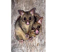 Coco and Yoyo - Australian Possum and Her Baby Photographic Print