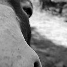 Donkey Snoz by Bethany Peiper