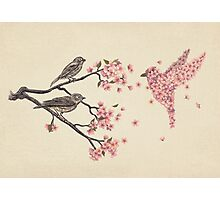 Blossom Bird  Photographic Print