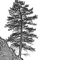 SINGLE TREE by Rodney55
