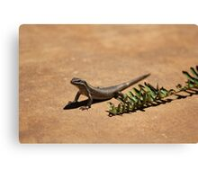 Interacting with wildlife - African Striped Skink Canvas Print