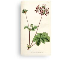 The Botanical magazine, or, Flower garden displayed by William Curtis V5 v6 1792 1793 0120 Pelargonium Bicolor, Two Colored Crane's Bill Canvas Print