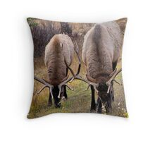 Elk - Vermillion Lakes, Banff  Throw Pillow