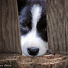 Can I Come Out & Play... by Laura Palazzolo