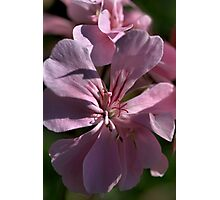Nature in Pink Photographic Print