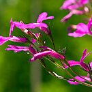 Small purple flowers reaching for the sun by Scott Englund