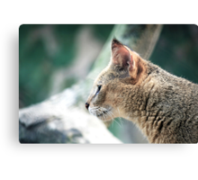 Wild whiskers Canvas Print