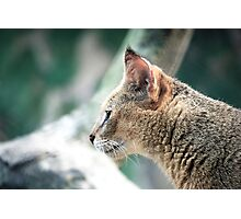 Wild whiskers Photographic Print
