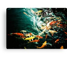 Fish in the pond. Canvas Print