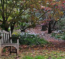 Come Sit Awhile - Mt Wilson NSW Australia by Bev Woodman