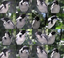 Butcher Bird by Virginia McGowan