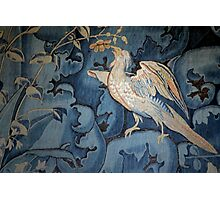 Silver Pheasant of Chenonceaux Photographic Print